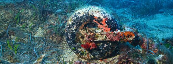 Now a home for sea creatures - a wheel from the Wellington bomber.